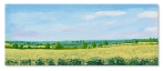 Oilseed Rape at Hillesden lll Catherine Winget oil on canvas landscape painting art artist oil painting North Bucks