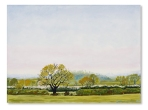 From Lenborough by Catherine Winget - oil on canvas oil landscape painting art artist North Bucks Trees Steeple Claydon fields countryside